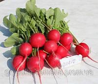 Диего F1 редис Hazera 25 000 семян, калибр 3,4-3,6