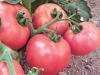 Торбей F1 (Torbay F1) насіння томату рожевого дет. Bejo 100 насінин