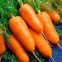 Каротель насіння моркви Насіння України 2 г