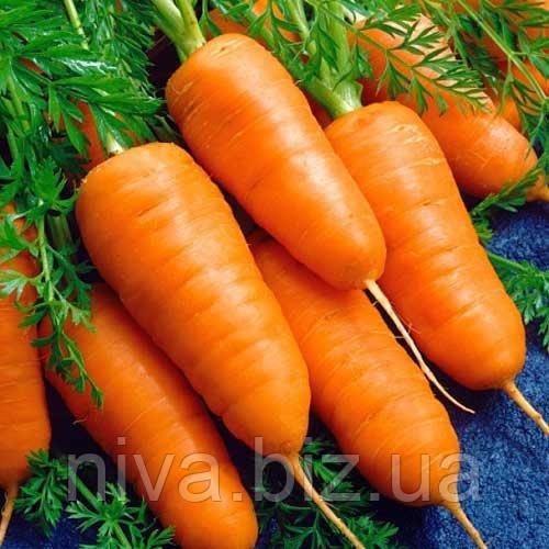Каротель насіння моркви Насіння України 20 г