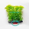 Растение Атман H-035E, 10см