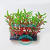 Растение Атман H-046A, 10см