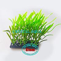 Растение Атман H-104C, 10см