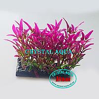 Растение Атман H-046F, 10см
