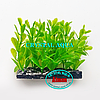 Растение Атман H-112B, 10см