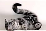Симптоматичний підхід в лікуванні хвороб серця у котів.