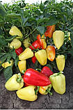 Яника F1 семена перца Kitano Голландия 250 шт, фото 2