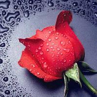 Алмазна вишивка DM-005 Червона троянда (Алмазная мозаика)