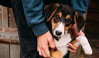 Приют для бездомных животных Сириус - нужна помощь!
