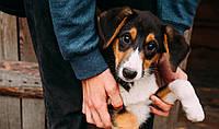 Приют для животных Сириус - нужна помощь!