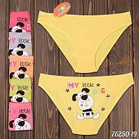 Трусы детские для девочки My little dog Domi Турция 76250-19 | 12 шт.