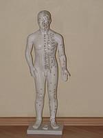 Муляж мужчины с акупунктурными точками, 70см