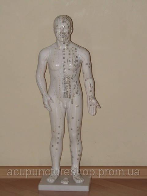 Муляж мужчины с акупунктурными точками, 70см - Все для рефлексотерапии и татуировки в Львове