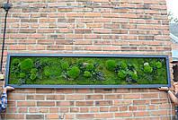 Панно из стабилизированного мха и других стабилизированных растений, фото 1