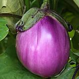 Беата F1 10 шт насіння баклажан Semo Чехія, фото 2