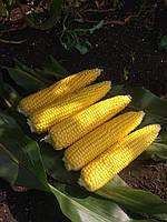 Семена сахарной кукурузы Свит Вондер F1 1000 семян Agri Saaten