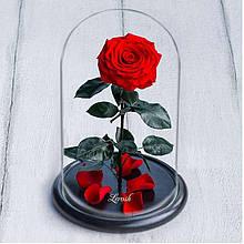 Стабилизированная роза в колбе Lerosh - De Lux 43 см, Красная SKL15-138954
