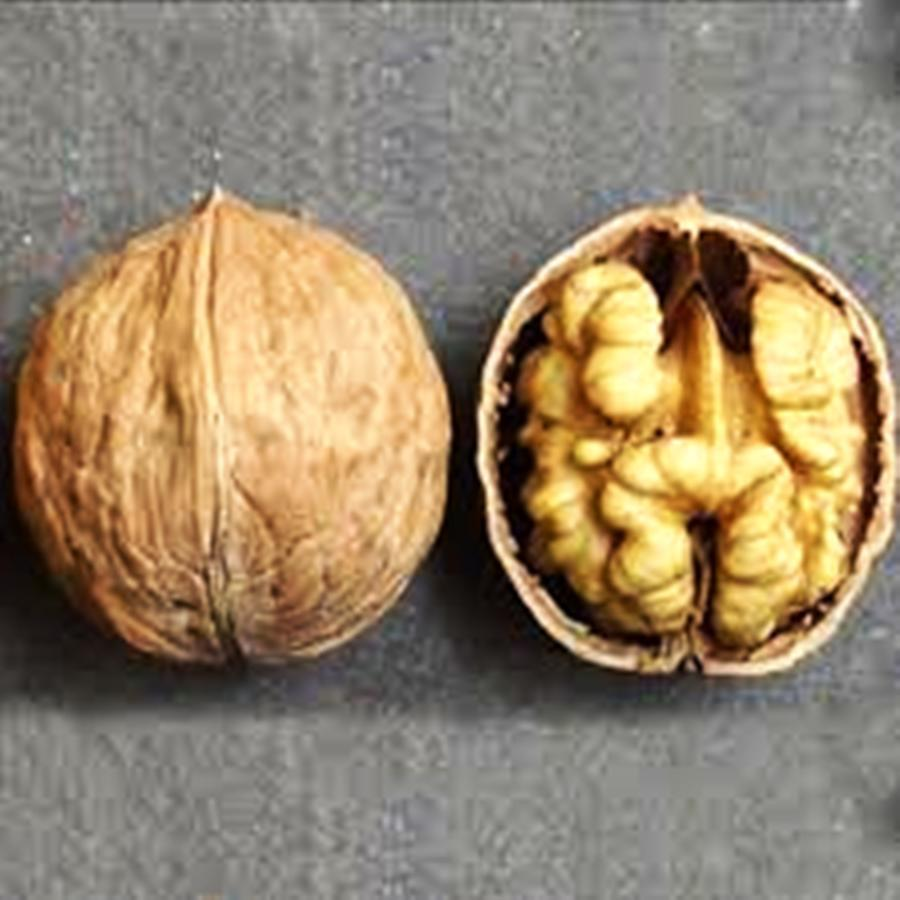 Саженцы Грецкого ореха Иван Багряный (1 летний) - средне позднего срока, урожайный, карликовый