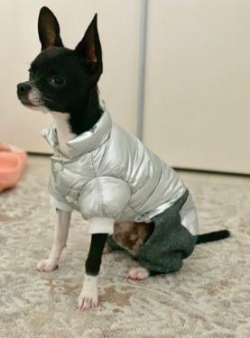 Одежда для собак - щенка или маленьких и средних пород - модная осенне-зимняя куртка, теплый комбинезон Silver L, фото 2