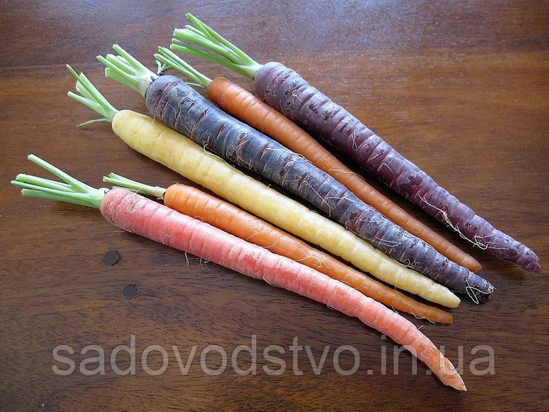 Морковь Черная туманность