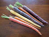 Морковь Черная туманность, фото 1
