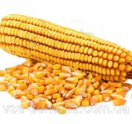 Кукуруза Яровець 243 МВ F1  1 кг