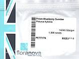 Семена петунии Prism 1000 шт Floranova Англия Sundae Mix, фото 4