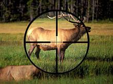 Hunt Expert (Хант Эксперт) - приманка для охоты на копытных