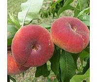 Саженцы  персика инжирного  Уфо - 5 ( Италия )