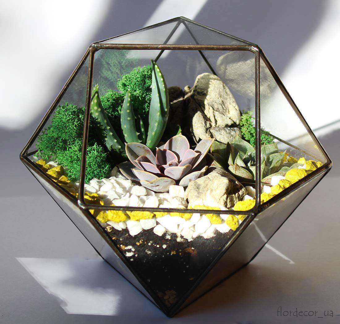 Флораріум Superbox mini