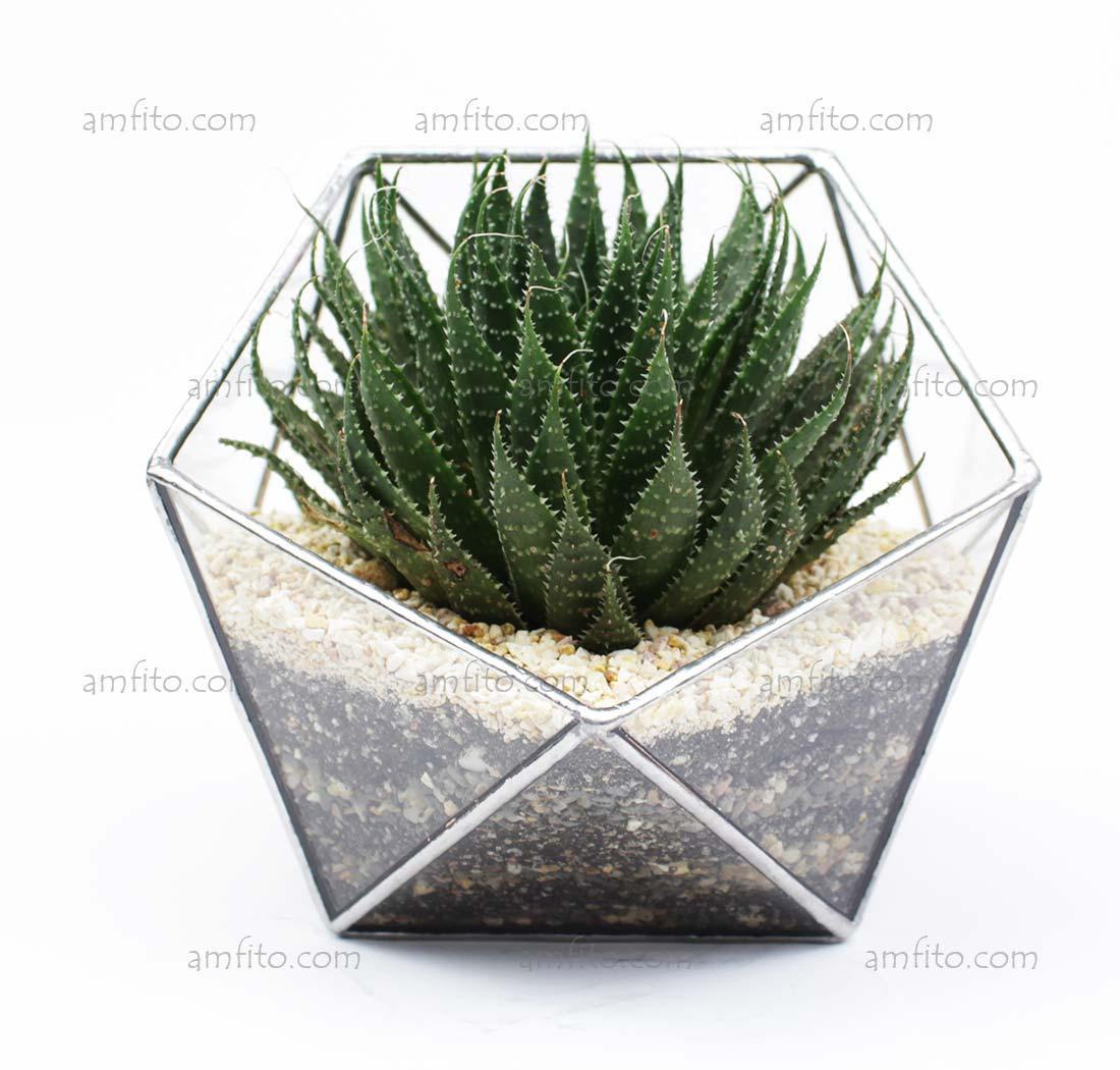 """Флораріум """"Basket mini"""""""
