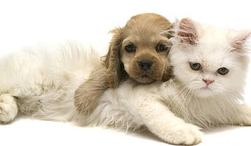 Региональная лимфотропная антибиотикотерапия в клинике мелких домашних животных