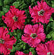Петуния Афродита F1, розовая, 10 гран Садыба Центр, фото 3