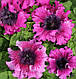 Петуния Темно-пурпурная F1, 10 гран Садыба Центр, фото 3