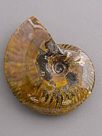 Образец Аммонит 110x90x30 414,57 г., фото 1