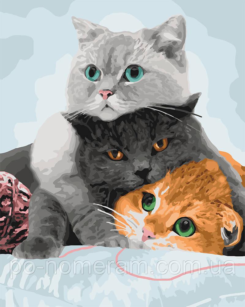Раскраска по цифрам Идейка Три кота (KH4151) 40 х 50 см ...