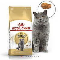 Сухой корм Royal Canin British Shorthair на развес