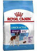 Royal Canin Giant Junior Active Корм для активных щенков  15 кг