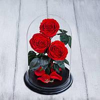 Стабилизированные три розы в колбе Lerosh - Premium 33 см,  Красный