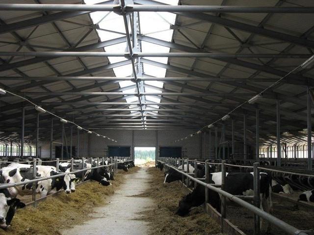 Строительство коровника для сухостойных коров.