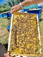 Пчелопакеты-Пчелосемьи Лучшая качество . Бесплатная доставка