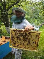 Доставлю пчелопакеты в Киев,  Харьков , Днепр , Запорожье, Кривой Рог . Карпатка 2020 год!