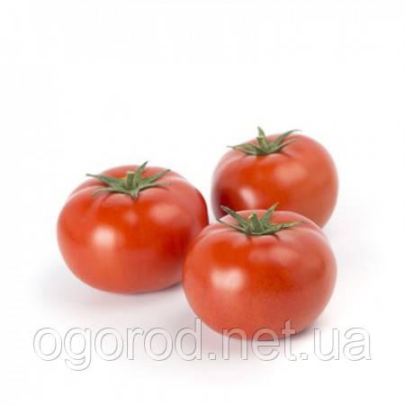 Уманья F1 семена томата Rijk Zwaan Голландия 100 шт