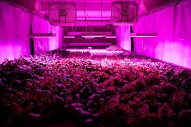 Особенности использования светодиодных фитосветильников