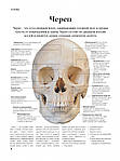 Анатомия человека, фото 3