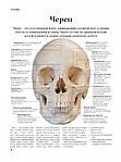 Анатомія людини, фото 3