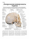 Анатомия человека, фото 4