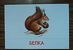 """Дидактические карточки """"Животные наших лесов"""", фото 2"""