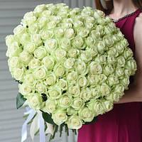 Букет из 101 белой розы, фото 1