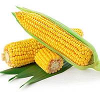 Семена кукурузы Порумбень МРФ 375 (Молдова) ( для степи)